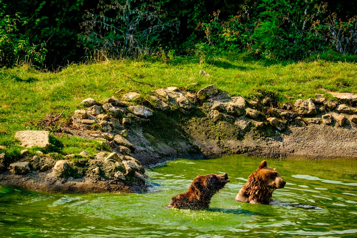 Libearty Bear Sanctuary in Zărnești