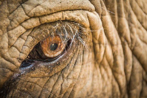 Help elephants in Thailand