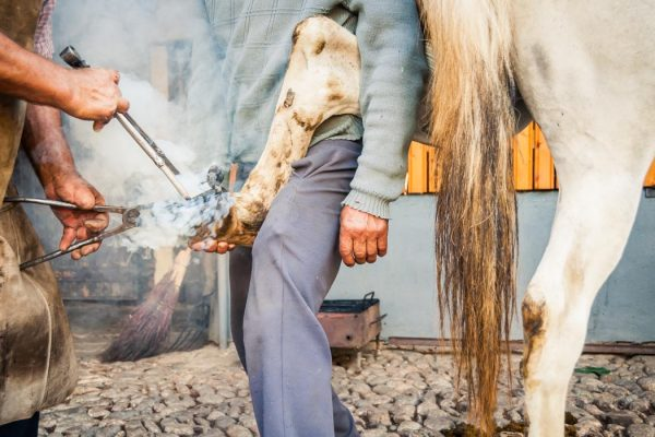 A blacksmith fixing a horseshoe in Gura Raului village, Romania.
