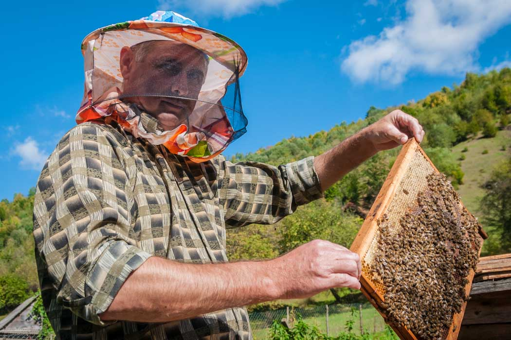 A beekeeper showing a frame of honeycomb in Nyzhnii Bystryi village, Ukraine.