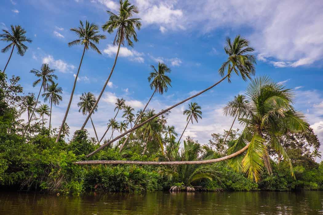Kota Kinabalu: Klias River trip.
