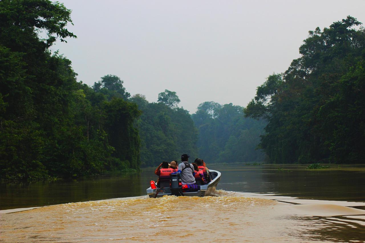 see orangutans in Bornoe