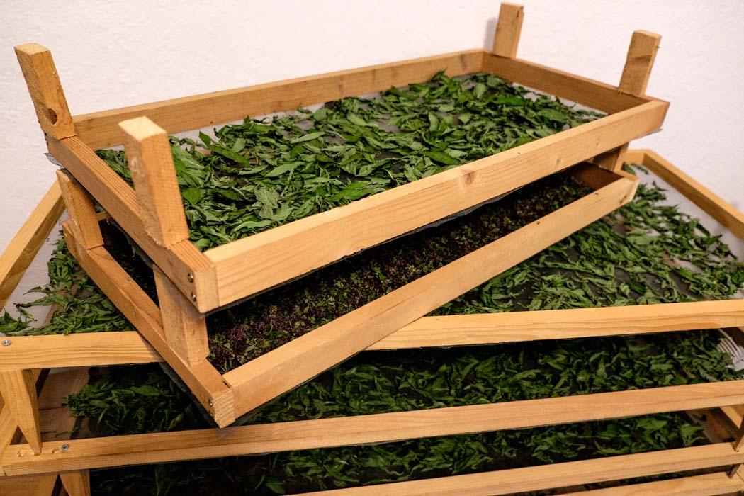 Sunday Story #11: Matej, a Slovenian Herbalist and Eco-nomad