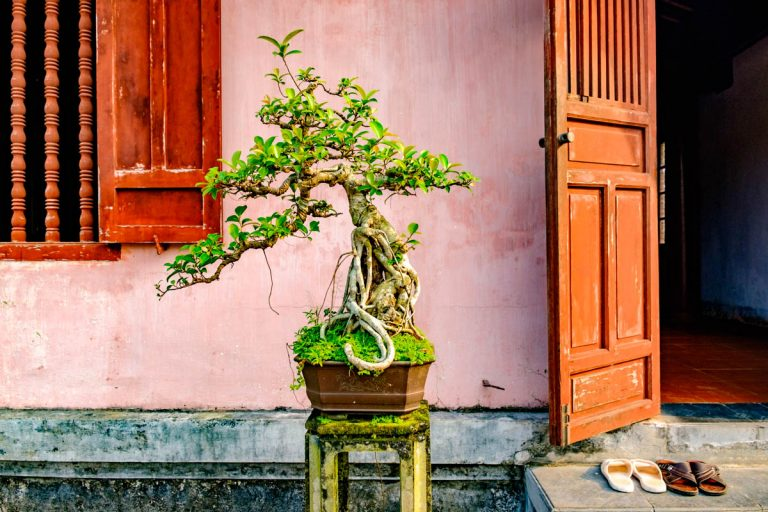 Things to Do and Best Hotels in Hue, Vietnam