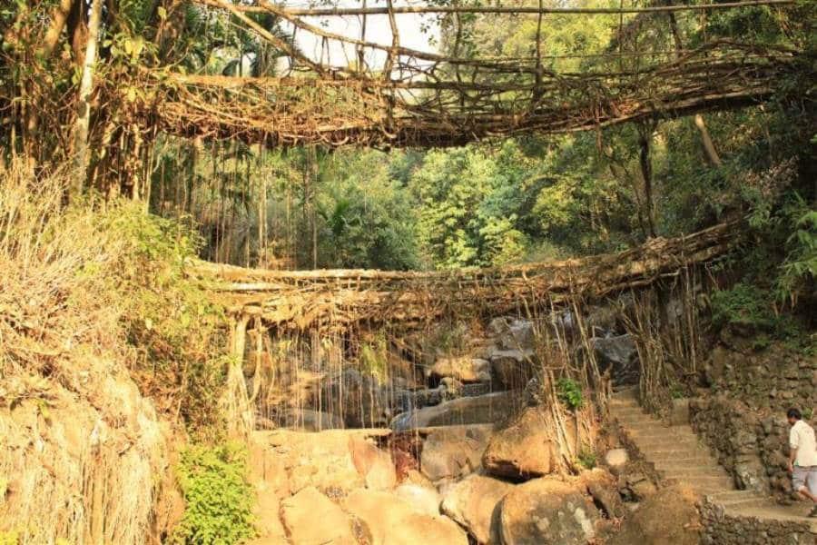 Meghalaya tree bridges